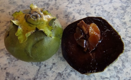 Black sapote at Helensville